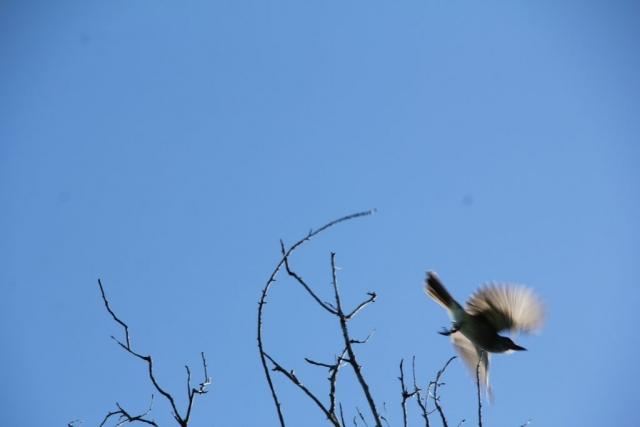 Oiseau à Cuba